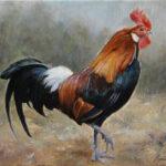 Umetnička slika - Petao - 30x40cm Ulje na platnu - umetnik Darko TOPALSKI